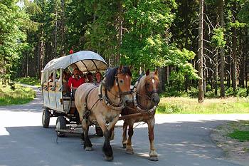 Kutschfahrten durch den Thüringer Wald